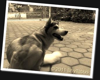 Husky 3